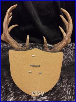 11 Point Deer Antler Mont