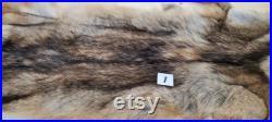 1X Fourrure de Coyote AVEC PATTES, peau de coyote, Canada, Nord Américain, fourniture et produits taxidermie, Cuir, tannage, pelt