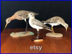 3 nices antiques Birds Taxidermy Natural History Wunderkammer Tassidermia Stuffed Taxidermie Cabinet Curiosity