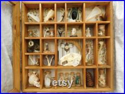 4 du Cabinet Curio