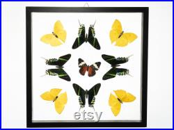 9 Comte Real Glass Framed Butterfly 13 x 13