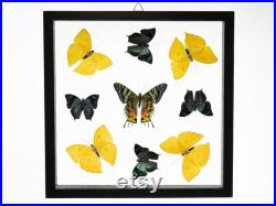 9 Count Real Glass Framed Butterfly 11 x 11