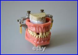 Ancien dentier bouche Objet de curiosité médical dentiste orthodontie