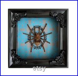 Araignée à ossature en bois Géant Pamphobeteus n.color Gothique pour le décor de mur à la maison taxidermie insecte de cadre insecttaxidermy beetletaxidermy