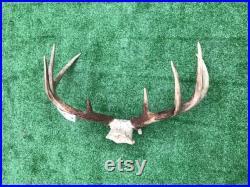 BIG ensemble de 8 points deOhio Whitetail DEER ANTLERS, Log Cabin, Hunting Lodge Decor 7 (Odocoileus virginianus)