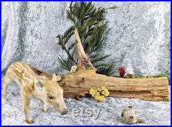 BR14 Taxidermie Bébé Javelina Porc Abeilles sur les bizarreries de bois Éducation Maison décor porcin affichage spécimen curiosités Bizarreries bizarrerieS Cute