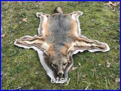 Belle Tanned XLg. GREY FOX RUG Fur Skin Hide Hunting Lodge Cabin Taxidermy head feet ( Urocyon cinereoargenteus )