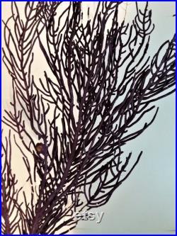 Cabinet de Curiosités gorgone violette pterogorgia anceps sur socle