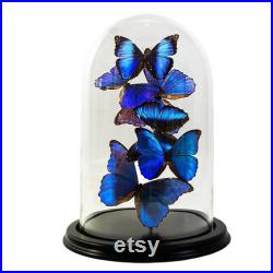 Caillot avec papillons morpho bleus (mix)