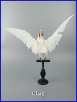 Chimère Pipin blanc, mi-pigeon mi-lapin, sur son perchoir Cabinet de curiosités