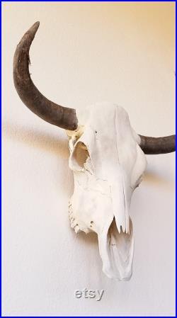 Cowskull France Réel Crâne de gouverne Décor du Sud-Ouest