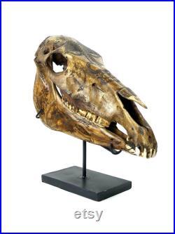 Crâne de cheval Dayak ciselé sur socle métallique noir- Indonésie Curiosité ethnique