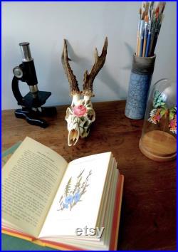 Crâne de chevreuil vintage peint à la main à la peinture acrylique motif délicat de rose inspiré d'une planche botanique ancienne