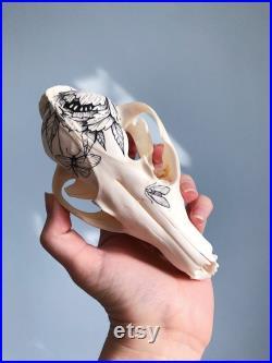 Crâne peint à la main du renard rouge