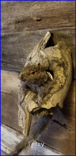 Écureuil gris taxidermie monter bizarres Obscure freakshow maison de la faune décor de la faune à l extérieur