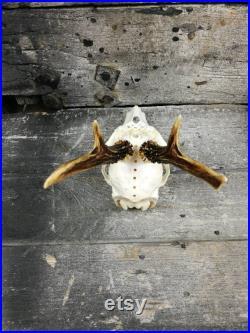 FAIT POUR COMMANDER Crâne de cerf roe gravé art énorme ornements impressionnants noeud celtique sculpture idée cadeau viking