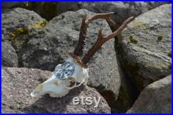 FAIT POUR COMMANDER Le vrai crâne de cerf sculpté crâne de cerf roe deer crâne avec des bois, crâne parfait de décor de maison de cadeau découpant la rune viking de vegvisir