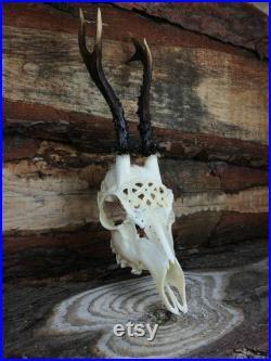 Fabriqué pour commander énorme crâne de cerf de roe gravé art énorme impressionnant ornements de coeur celtique scoflant le père de la petite amie de petit ami de petit ami de ami