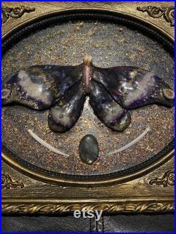 Fée de dent de Saturnidae d or