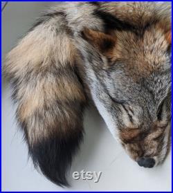 Fourrure de Coyote du Québec, Canada, sans les pattes fourniture et produits taxidermie, Cuir, tannage, pelt