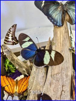 Grand affichage décoratif réel de papillon