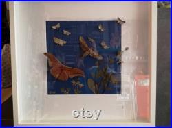 Grand cadre insectes et fleurs séchées cabinet de curiosité taxidermie papillon
