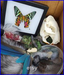 Grande boîte mystère Spécimens d histoire naturelle et d étrangetés