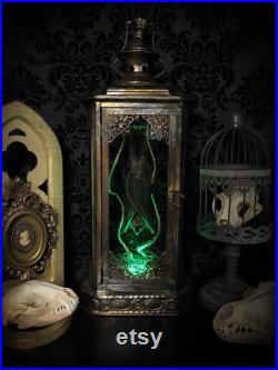 Grande lanterne de chauve-souris de taxidermie d'or avec DES LUMIÈRES décor gothique à la maison Curiosités Bizarres Décor gothique Real Bat