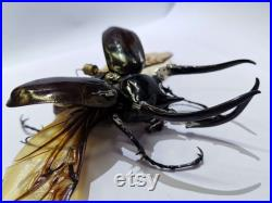 Handmade Steampunk Clockwork MechBeetle Real Chalcosoma atlas Rhino Beetle Framed Insect Taxidermy Art Cyberpunk