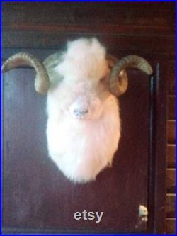 Highland européenne bélier taureau taxidermie crâne avec de longues cornes bois moutons tête à la maison décor afficher ornement gothique de guérison chamanique
