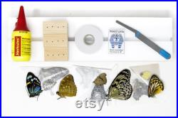 Kit de montage de fixation de papillon, équipement de papillon, spécimens d entomologie