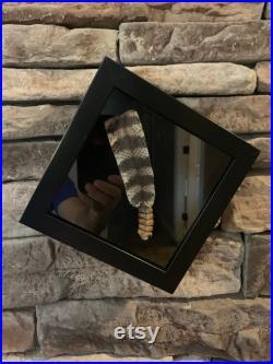 La queue de serpent à sonnettes de taxidermie dans l affichage de boîte d ombre.