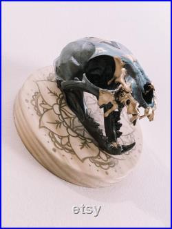 Le crâne de lynx de pharaon
