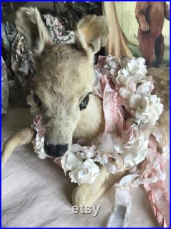 Le plus beau bébé cerf . Bambi