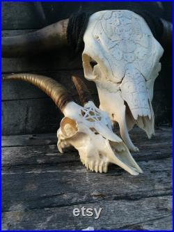 MADE TO ORDER Real Jeune crâne de chèvre avec pentagramme pentacle gravé sculpture 666 idée cadeau maléfique pour petit ami ou petite amie gothique