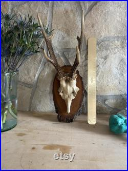 Majestic Antique Antlers Absolutelly Stunning and Hypnotisant Old Wooden Base Authentic Rustic Touches for your Beautiful Home AMAZING