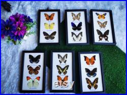 Mix Collection Real Butterfly Taxidermy Insect Wood Frame Portrait Display Home