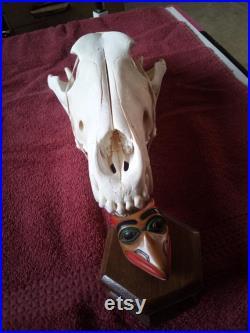 Nouveau crâne de loup 10-1 2 x 5-1 2