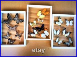 Nouveau mélange papillon cadre en verre Bois Insecte Décoration Maison Collection Ensemble Display