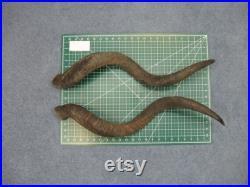 Paire assortie de cornes de Kudu Grande 35 (1024-LG-G03) 10UB05