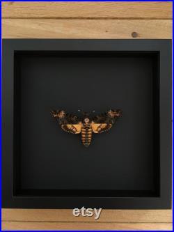 Papillon Sphinx Tête de Mort-Acherontia Atropos envergure XL naturalisé sous cadre en bois laqué noir-Décoration Le Silence des Agneaux
