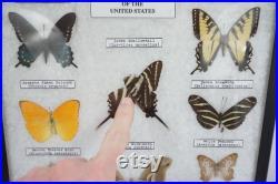 Papillons encadrés, entomologie de taxidermie, Ledidoptera, cas d étude de spécimen, affichage de papillon de classe de science, bateau libre d ETATS-UNIS de papillons de papillons de nuit