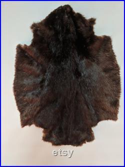 Peau Fourrure de castor NOIR du Québec, Canada, Animal trappé et tanné, fourniture et outils, cuir, trappeur canadiens, tannage, très doux,