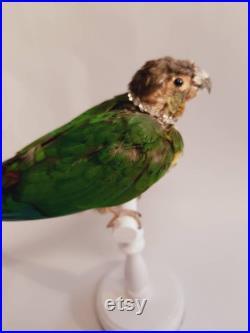 Perroquet d arc-en-ciel sur un perchoir.