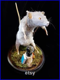 Rat taxidermie Le Seer