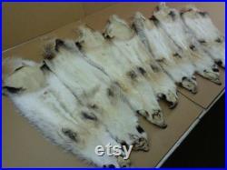 Real Large Tanned Badger Hide Fur Pelt Face Tail 31-36 ETATS-UNIS (Grade Semi-Heavy Furred )