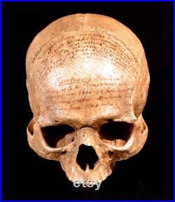 Réplique de crâne de Descartes