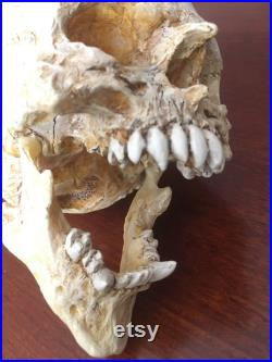 Réplique de crâne de gobelin