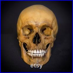 Réplique humaine de crâne, plastique. La première copie de l original.