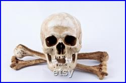 Skull Replica Mimosa avec paire d os